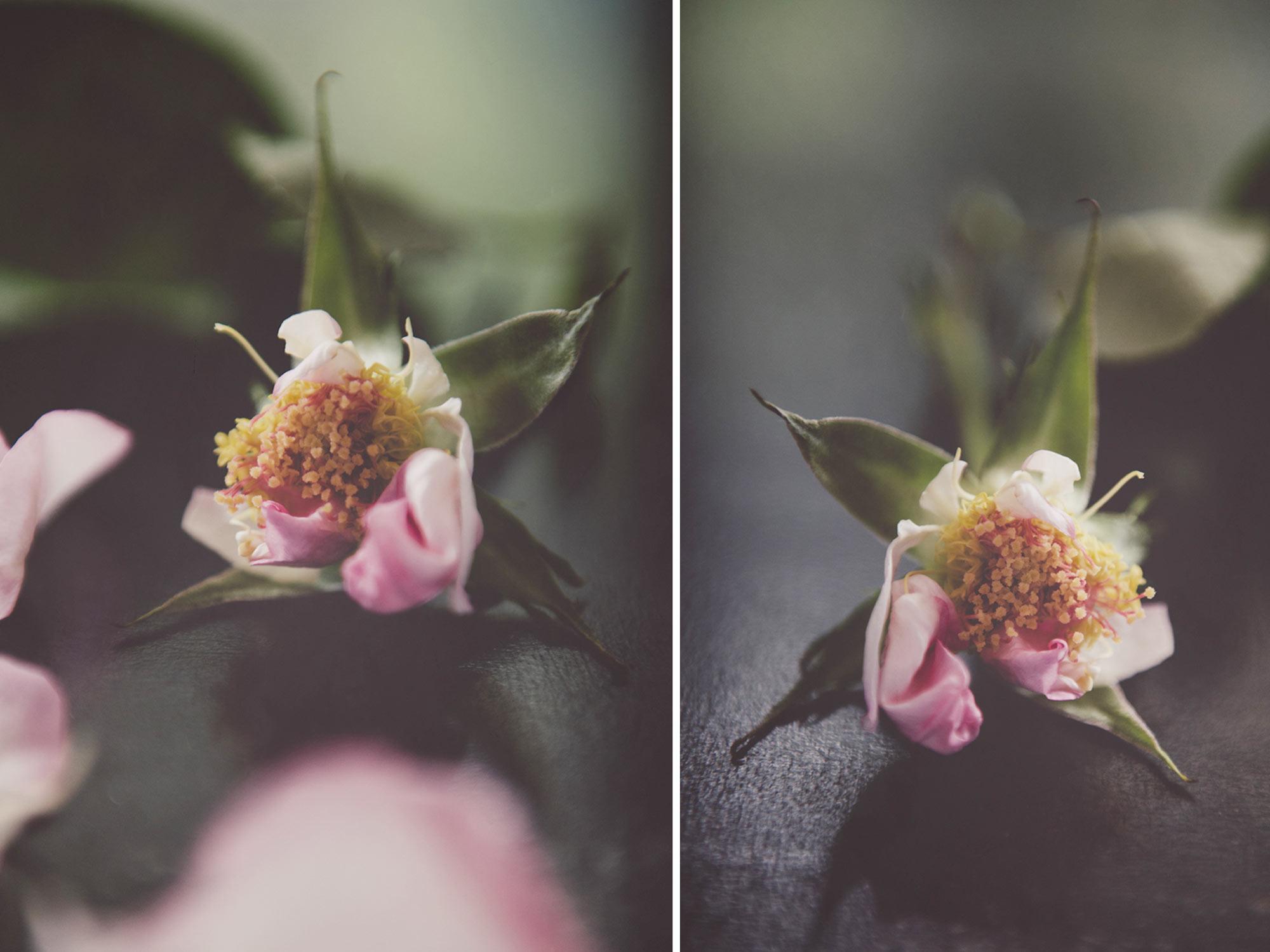 roses-15