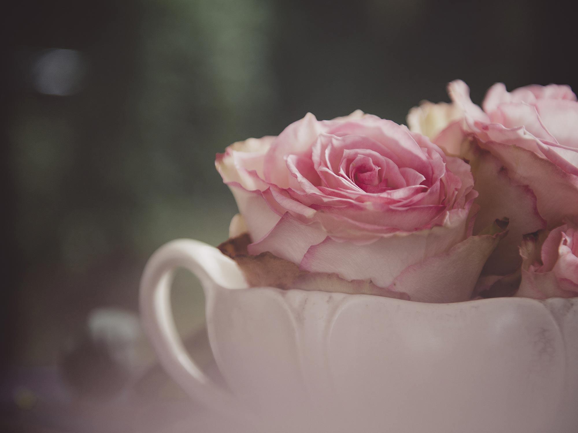 roses-06